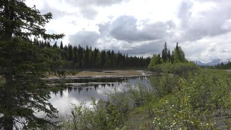 Alaska-Beaver-Pond-And-Spruce-Forest
