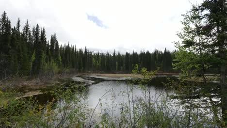 Alaska-Beaver-Pond