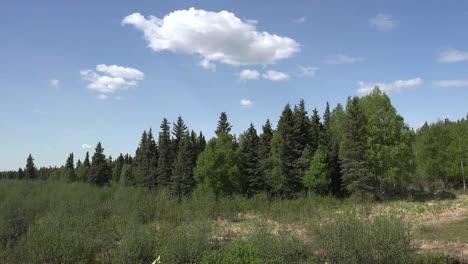 Alaska-Cloud-In-Blue-Sky-Above-Forest
