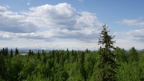 Alaska-Bosque-Del-Norte-Y-Nubes-Hinchadas