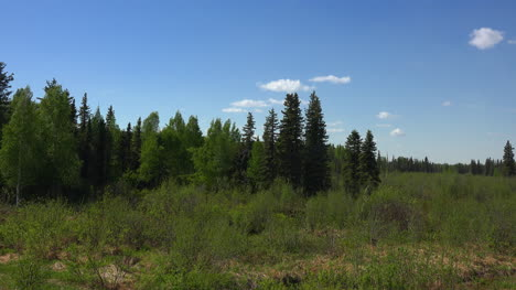 Alaska-Northern-Forest-Zoom-In