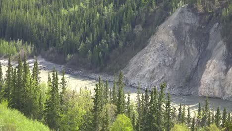 Alaska-River-And-Spruce-Trees