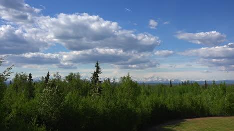 Alaska-Zooms-To-Mount-Denali-Past-Tall-Tree