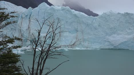 Argentina-Glacier-And-Dead-Tree