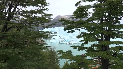 Argentina-Zooms-To-Glacier-Through-Beech-Leaves