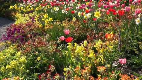 Flowers-Zooms-In-To-Tulips