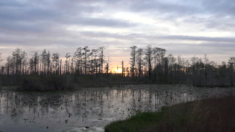 Georgia-Okefenokee-Beyond-Cypress-Trees-From-Boat-Pan-And-Zoom