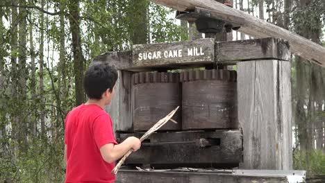 Georgia-Okefenokee-Boy-Sticks-Cane-In-Sugar-Mill
