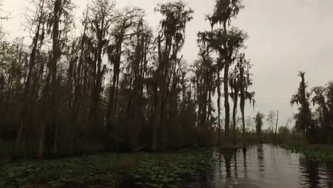 Georgia-Okefenokee-Brown-Cypress-Trees