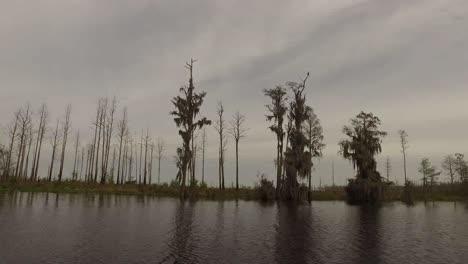 Georgia-Okefenokee-Brown-Cypress