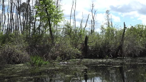 Georgia-Okefenokee-Clouds-Over-Swamp-Pan