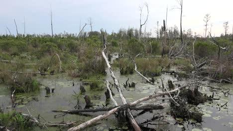 Georgia-Okefenokee-Cut-Over-Area-In-Swamp