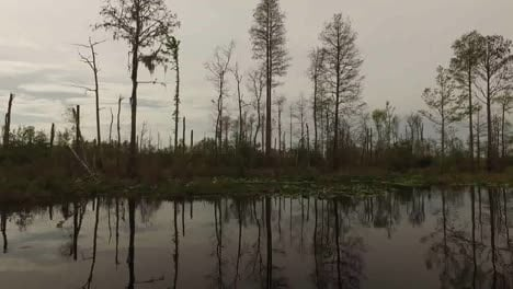 Georgia-Okefenokee-Cut-Over-Cypress-Forest-From-Boat