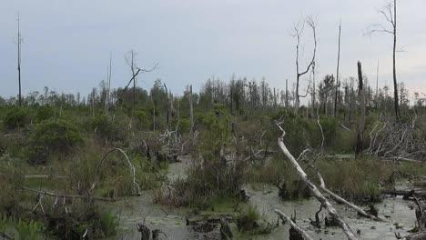 Georgia-Okefenokee-Cut-Over-Swamp-Pan