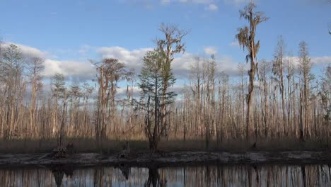 Georgia-Okefenokee-Cypress-Forest-Zoom-Out