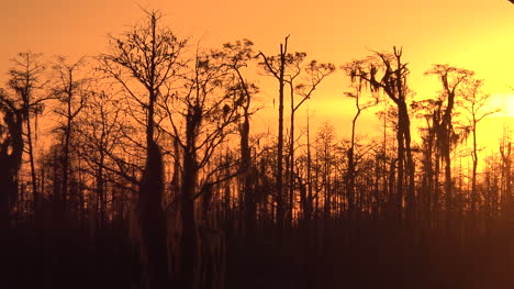 Georgia-Okefenokee-Cypress-Trees-Against-Orange-Sky