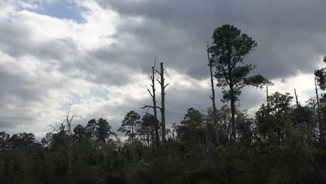 Georgia-Okefenokee-Dark-Clouds-Over-Forest