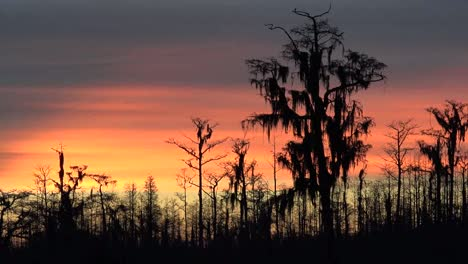 Georgia-Okefenokee-Dark-Trees-Against-Sky-Pan