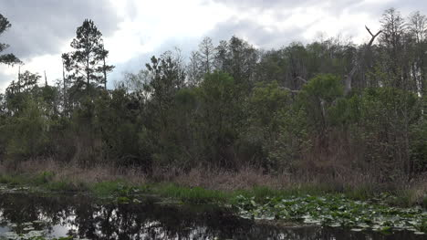 Georgia-Okefenokee-Drainage-Canal-And-Forest-Pan
