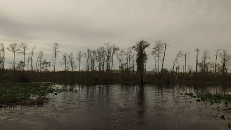 Georgia-Okefenokee-Forest-By-Swamp