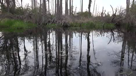 Georgia-Okefenokee-Grass-And-Tree-Trunks-Reflected