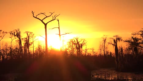 Georgia-Okefenokee-Hot-Sun-In-Swamp