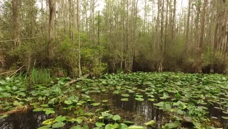 Georgia-Okefenokee-Lily-Pads-On-Water