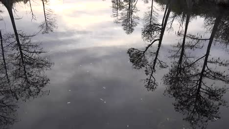 Georgia-Okefenokee-Looking-Down-At-Reflections