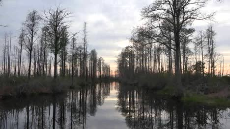 Georgia-Okefenokee-Moving-Through-Line-Of-Trees