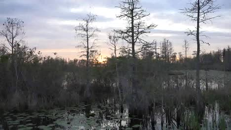 Georgia-Okefenokee-Passing-Trees-In-The-Swamp