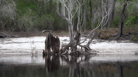 Georgia-Okefenokee-Reflections-And-Roots