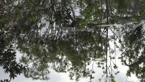 Georgia-Okefenokee-Reflections-In-Swamp-Water