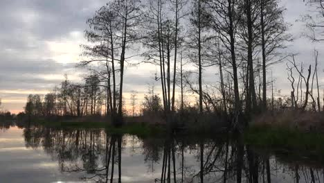 Georgia-Okefenokee-Reflections-Of-Trees-In-Water
