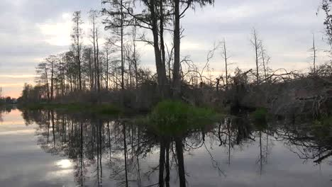 Georgia-Okefenokee-Reflections-Of-Trees
