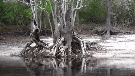 Georgia-Okefenokee-Roots-And-Reflections