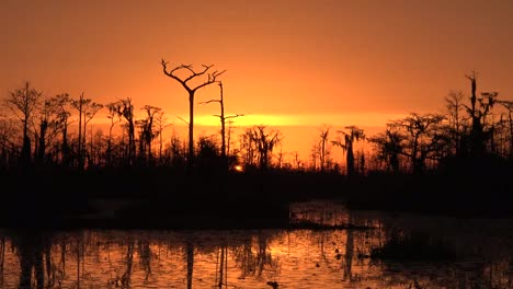 Georgia-Okefenokee-Setting-Sun-Orange-Sky-Zooms-Out