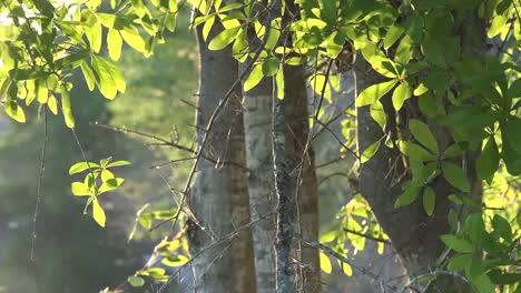 Georgia-Okefenokee-Sun-On-Trees