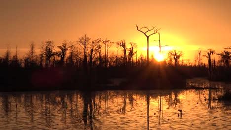 Georgia-Okefenokee-Sun-Sinking-Beyond-Cypress-Trees