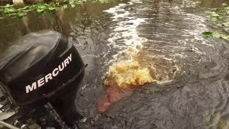 Georgia-Okefenokee-Tilts-To-Motor-Then-Swamp-Water