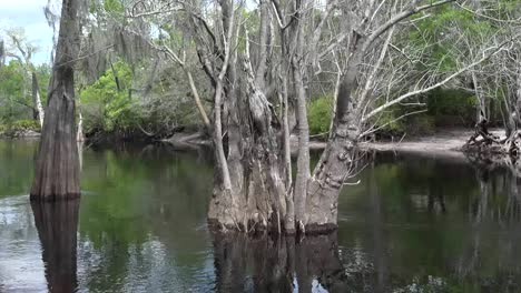 Georgia-Okefenokee-Trees-And-Water-Zoom