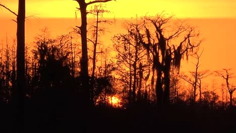 Georgia-Okefenokee-Zooms-On-Orange-Sunset