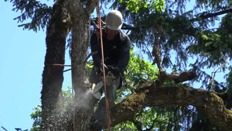 Oregon-Climbing-And-Cutting-In-A-Tree