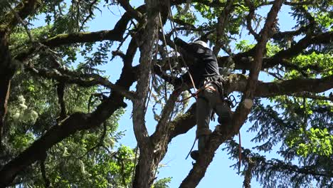 Oregon-Man-Climbing-In-A-Tree-Zoom-In