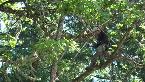 Oregon-Tree-Trimming