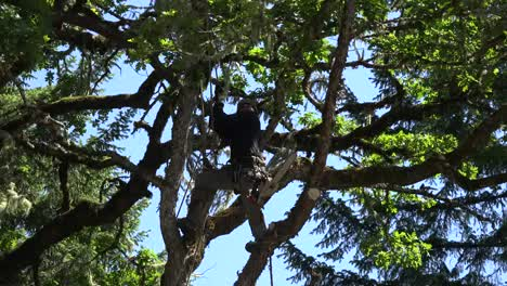 Oregon-Woodsman-Climbs-With-Rope
