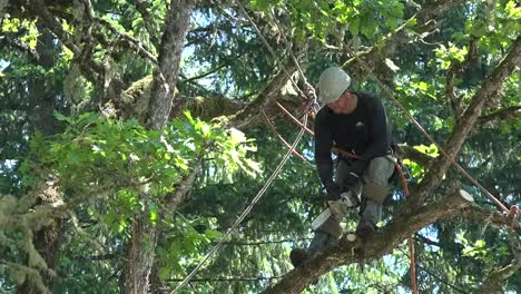 Oregon-Zooms-On-Tree-Cutter