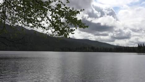 Rama-De-Alaska-Marcos-Montaña-Lago-Pan