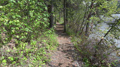 Alaska-Path-In-Forest
