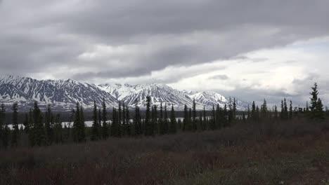 Alaska-Montaña-Nevada-Con-Abeto-Acercar