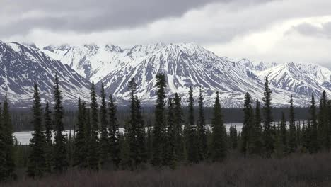 Alaska-Snowy-Mountains-And-Line-Of-Spruce
